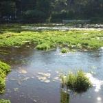 静岡県三島市柿田川湧水公園の写真