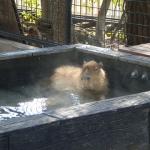 カビパラの入浴