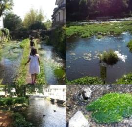 三島の清流写真
