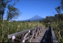 富士浮島ヶ原自然公園のフリー写真