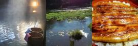 温泉と湧き水と鰻の写真