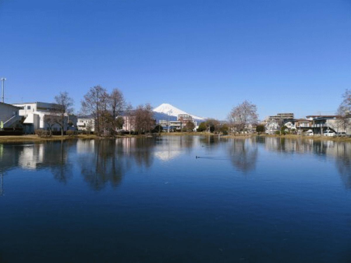 水と自然の豊かな街:三島市の魅力を表現している写真