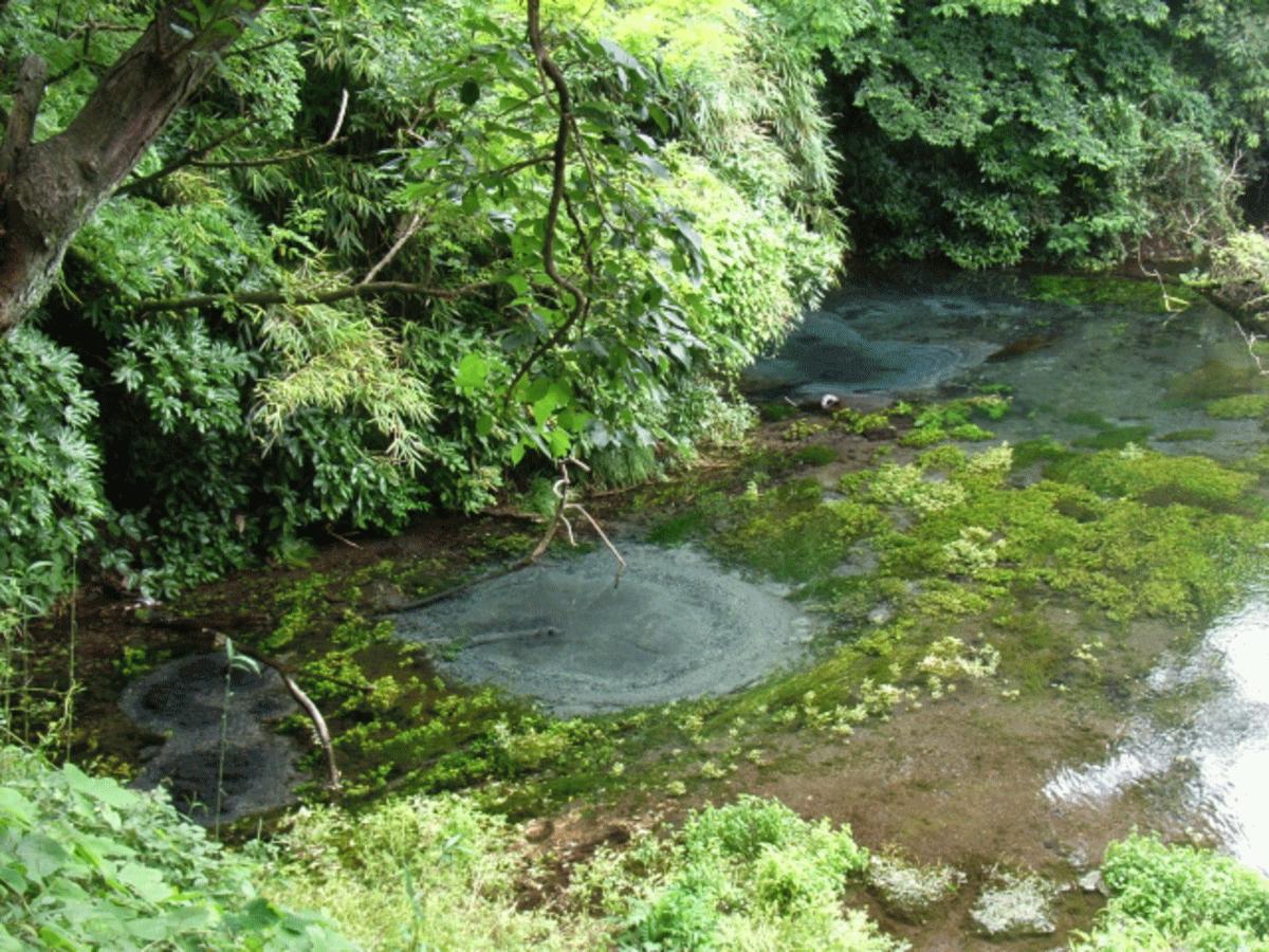柿田川の写真