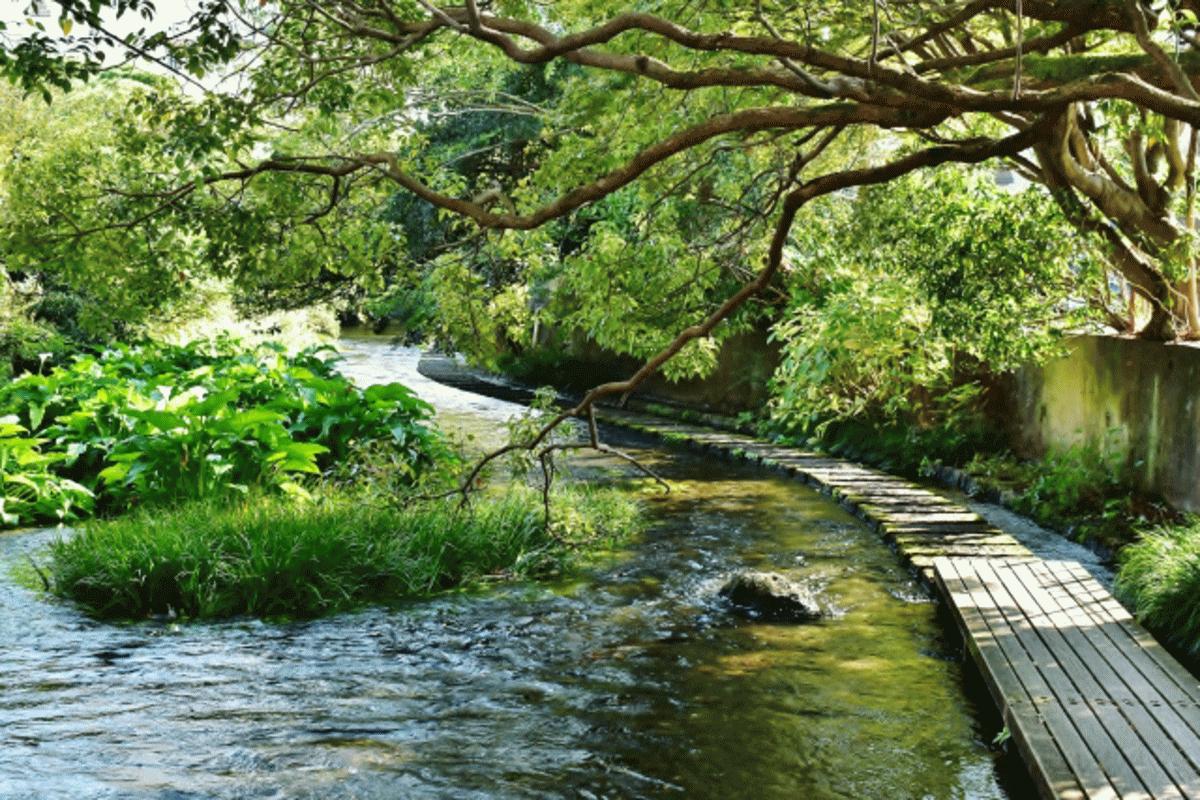 三島市の源兵衛川の写真